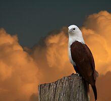 The Evening Perch by byronbackyard