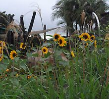 wild sunflowers by chrissy mitchell