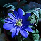 Windflower Blue by Heather Goodwin