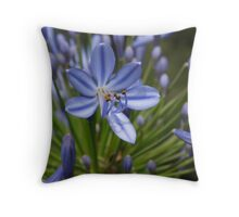 Blue Agapanthus ~ Lily of the Nile Throw Pillow
