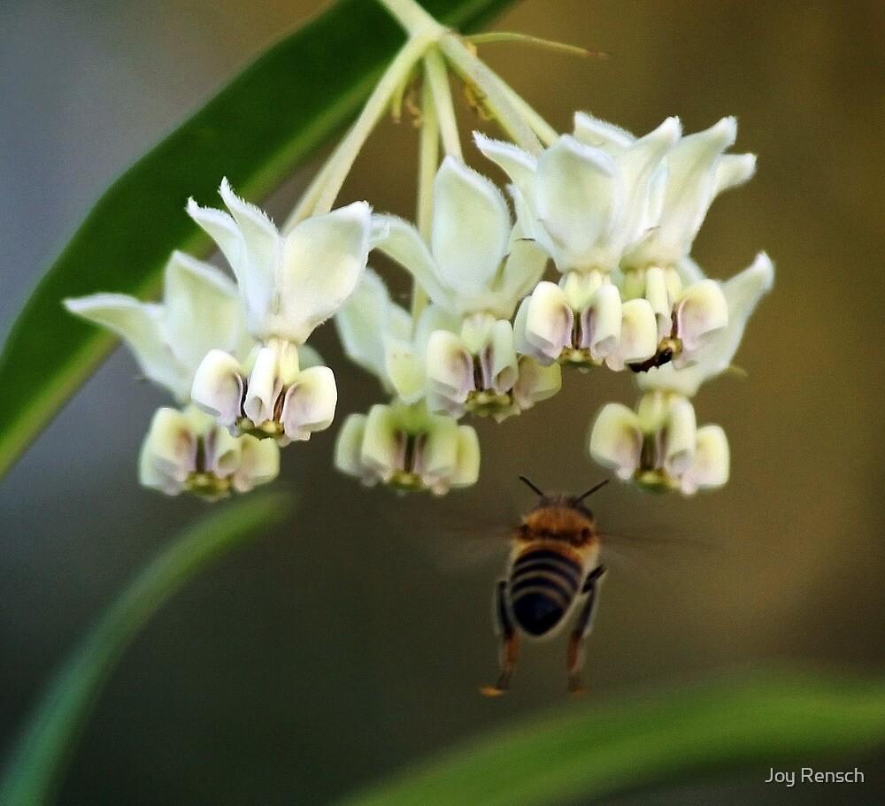 Flight of a bumble bee by Joy Rensch