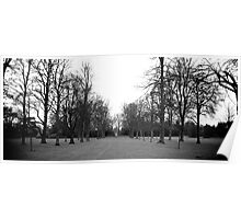 Black and White Tree Panoramic Poster