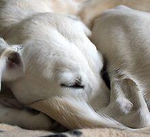 Sweet Slumber by Sally J Hunter