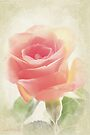 Vintage rose by aMOONy