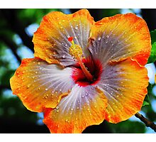 fifth dimension Photographic Print