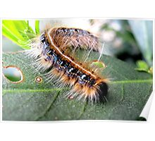 Lunching on Leaves Poster