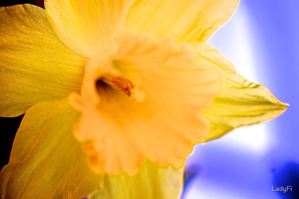 Silken spring petals by LadyFi