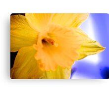 Silken spring petals Canvas Print