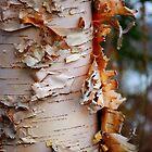 Shredded Bark by Randall Talbot