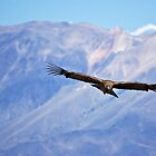 Flying High Again, Colca Canyon by strangelight