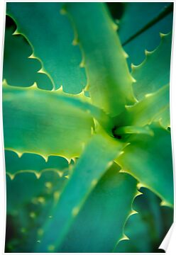 Sweet Sharp Succulent by Katherina Bilko