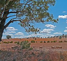 sheep station, Cootamundra to Coolac, NSW, Australia by Margaret  Hyde