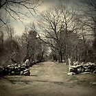 A Walk to Remember-Odiorne State Park, Portsmouth, NH. by Jennifer Bishop