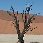 Tree in Sossusvlei, Namibia by Suzy Harrison