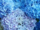 Blue Floral art Hydrangea Flowers Botanical Baslee Troutman by BasleeArtPrints