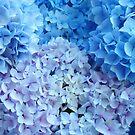 Blue Floral art Hydrangea Flowers Botanical Baslee Troutman by BasleeArtPrints