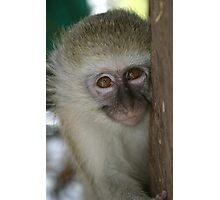 Orphan Vervet Monkey Photographic Print