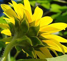 Sunflower Glowing Sunlit Floral Garden art Baslee Troutman by BasleeArtPrints