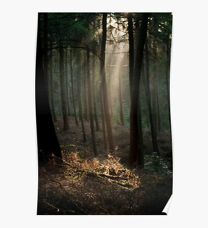 Light Through the Trees Poster