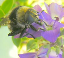 A feasting Bee. by Livvy Young