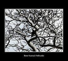 Crow in snow covered trees by Rose Santuci-Sofranko