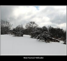 Snow covered trees on a knoll by Rose Santuci-Sofranko