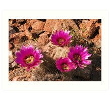 Strawberry Hedgehog Cactus Art Print