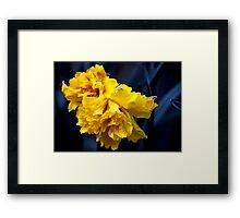 Double Daffodil Framed Print