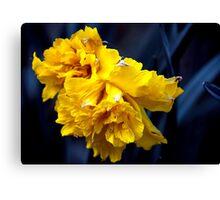 Double Daffodil Canvas Print