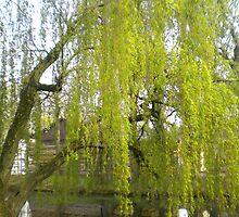 Spring willow - City park Weert by Marieke Sharp