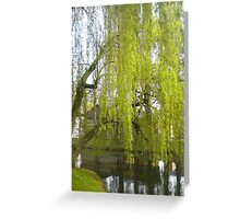 Spring willow - City park Weert Greeting Card