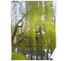 Spring willow - City park Weert Poster