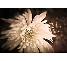 Tinted Flower Photographic Print