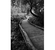 Bridge in Central Park Photographic Print
