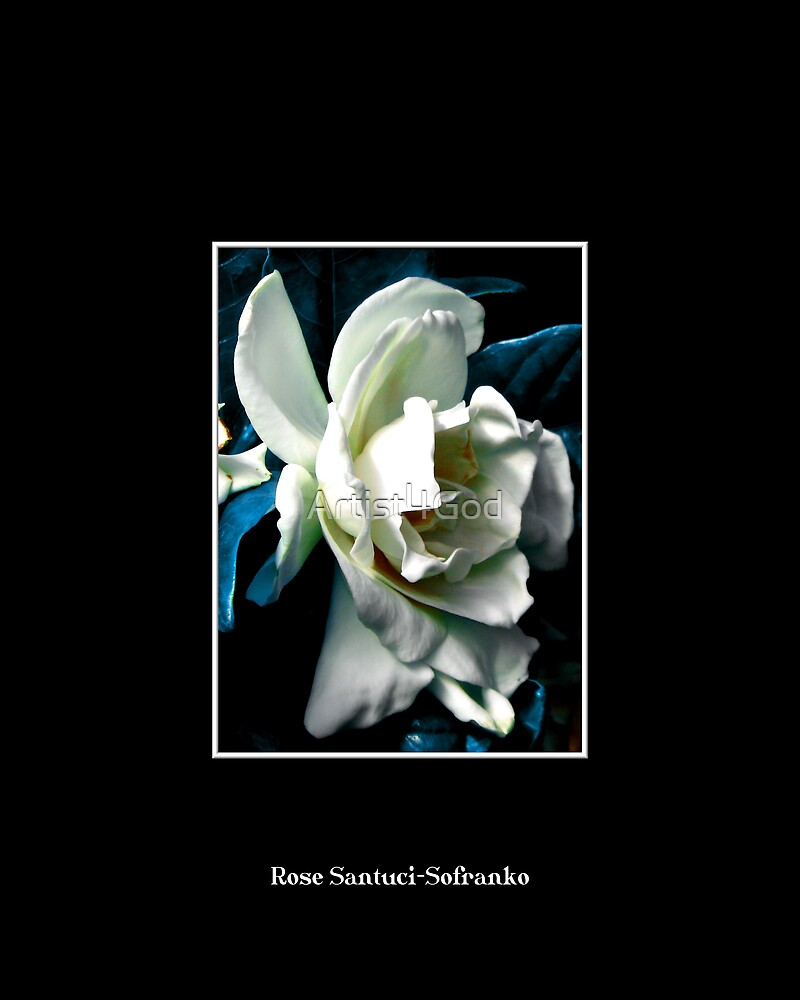 Camellia ( Blue Grass Effect ) by Rose Santuci-Sofranko