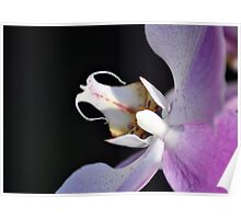 This is just orchid! Poster