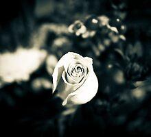 Rose in Black & White by LaNita Adams