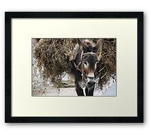 Pack mule Framed Print