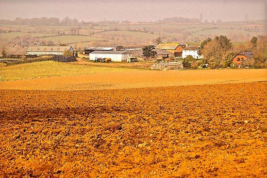 East Devon Rural ...6 by Mike  Waldron