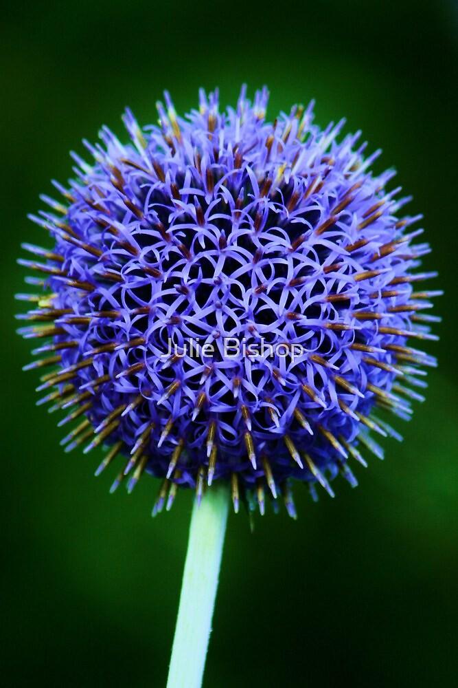 Blue Thistle by Julie Bishop