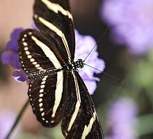 Zebra Longwings  by Saija  Lehtonen