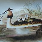 GREAT CRESTED GREBE WITH CHICKS by Marilyn Grimble