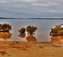 Inlet Mangroves by Bette Devine