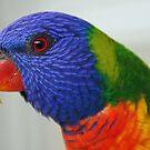 Rainbow Lorikeet by triciaoshea
