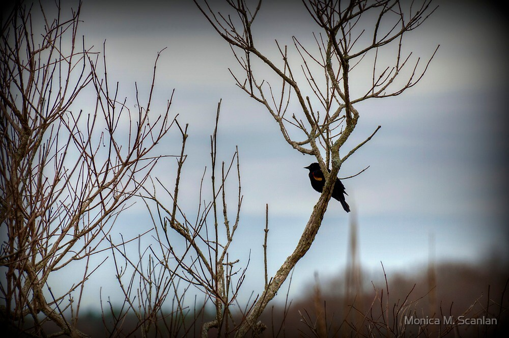 Red-Winged Blackbird by Monica M. Scanlan