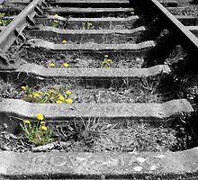 Train Track by Samantha Jones