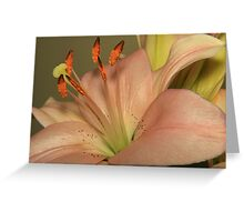 Portrait Of A Lily Greeting Card