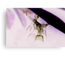 Insect Art Canvas Print