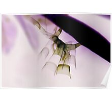 Insect Art Poster