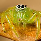 Green jumper by Richard Majlinder